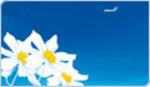 finnair_blommor.jpg